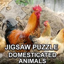 Jigsaw Puzzle: Domesticated Animals